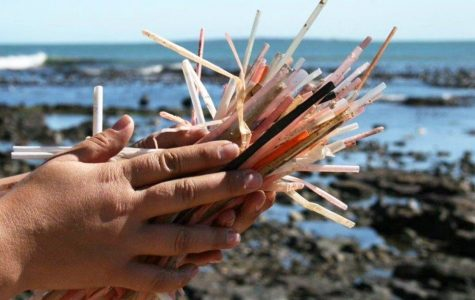 Hawaii's Last Straw