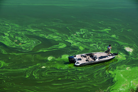 C09GBD A bass fisherman casts for fish in the Toxic Blue Green Algae in the Copco Reservoir in Northern California.